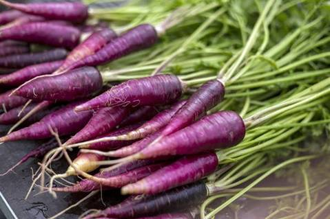 Сорта фиолетовой моркови