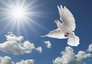 Какие бывают породы бойных голубей?