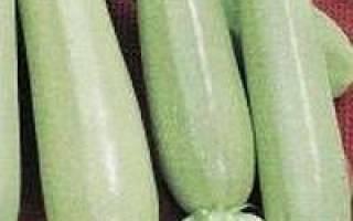Особенности выращивания белого кабачка