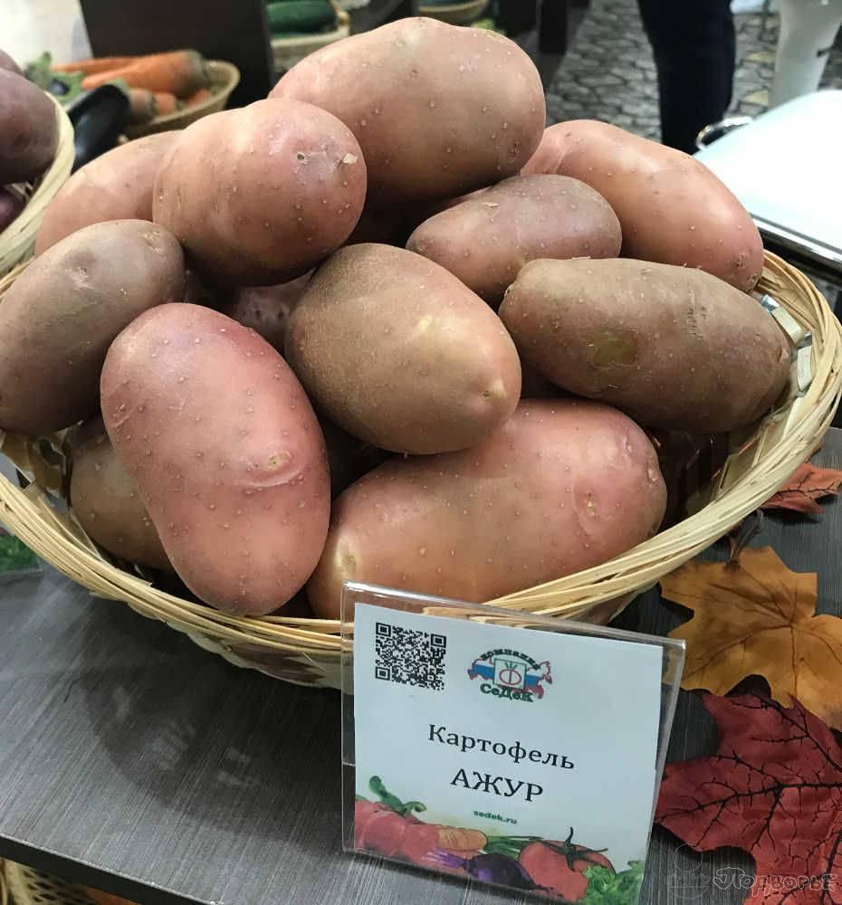 Заслуживший доверие огородников всего мира — картофель ажур: описание сорта