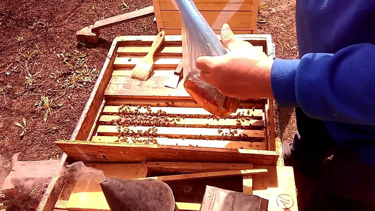 Апимакс и маврик для лечения пчел: инструкция по применению