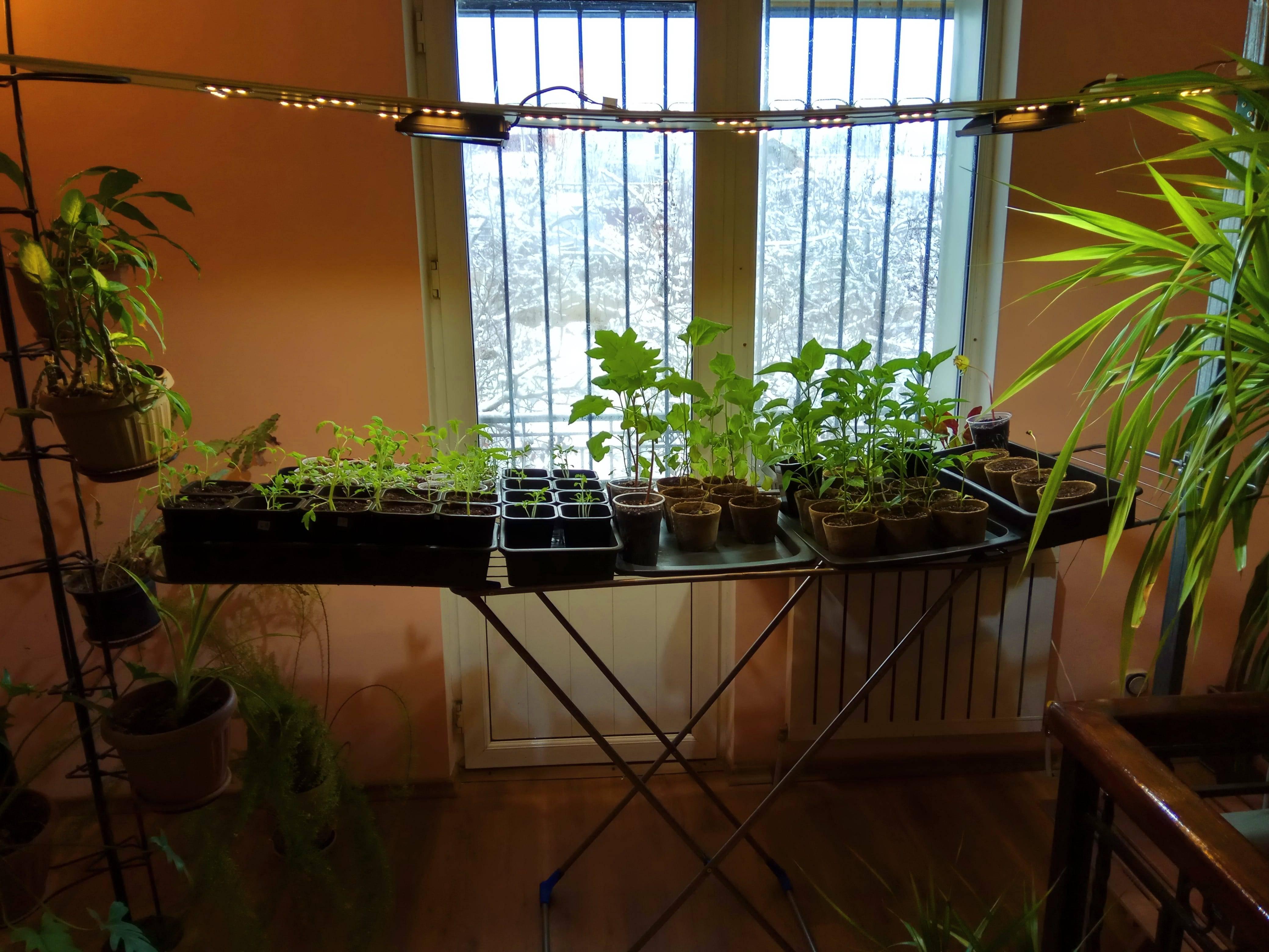 Подсветка рассады томатов в домашних условиях