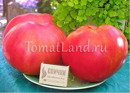 Томат Розовый мед