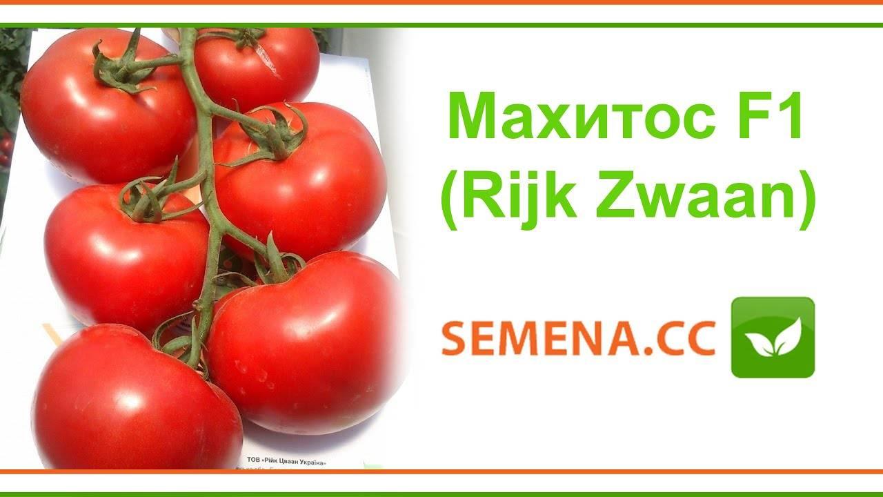 Томат махитос: характеристика и описание сорта, отзывы, урожайность, норма высадки