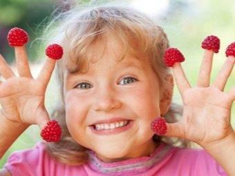 Сорта малины раннего срока созревания: разновидности, особенности выращивания
