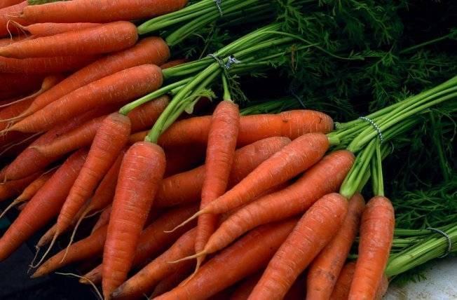 Девицы в темнице, или лучшие сорта моркови для хранения на зиму