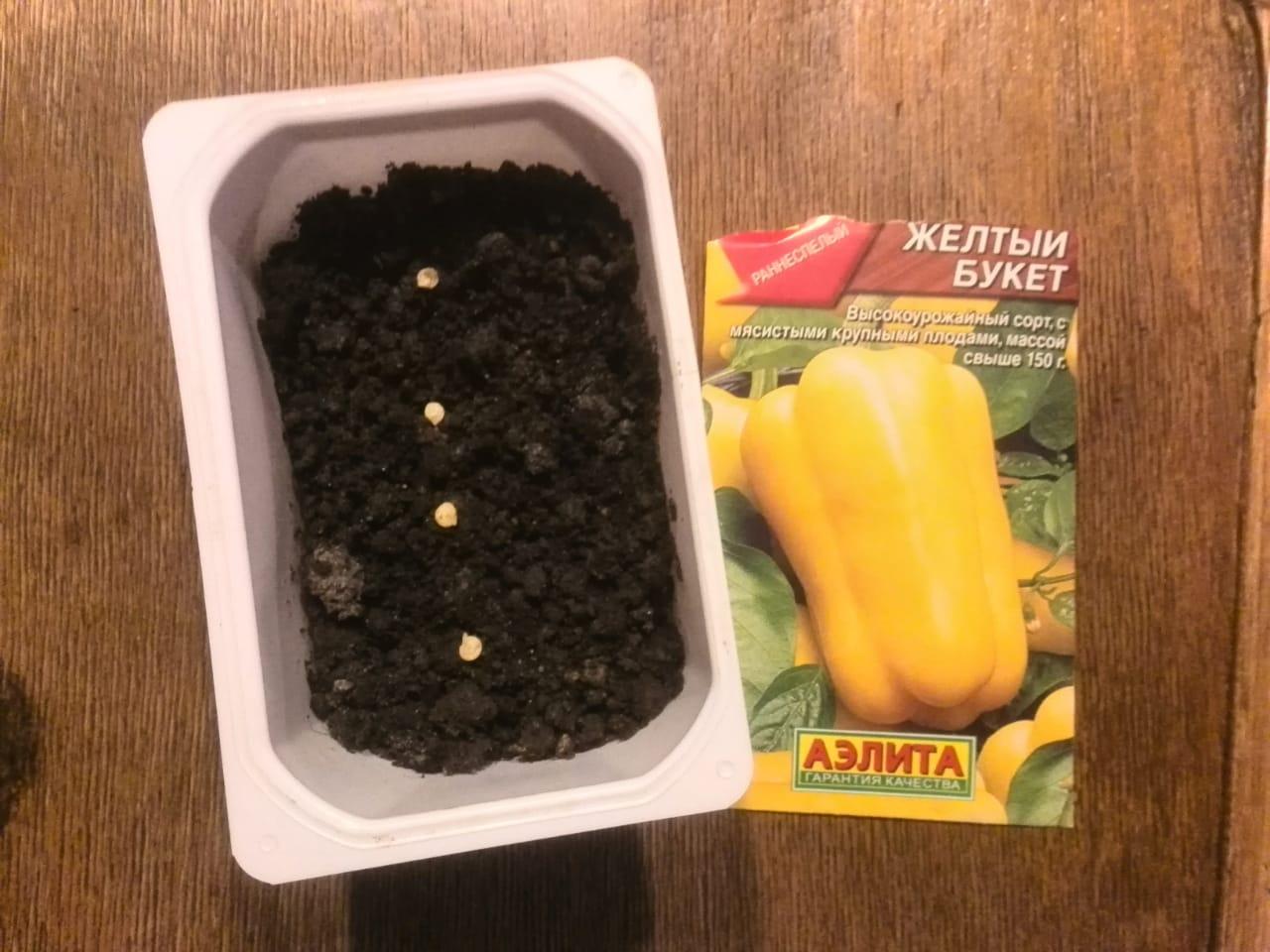 Когда посадить баклажаны на рассаду дома и в открытом грунте: лучшие дни по луне в 2020 году