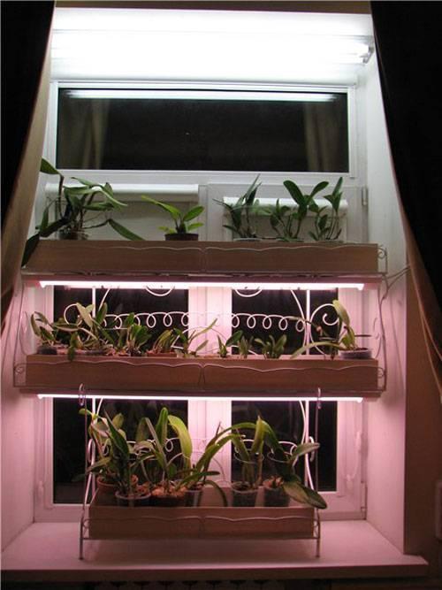 Как сделать фитолампу для подсветки рассады и растений в домашних условиях — пошаговая инструкция