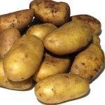 9 причин сажать сорт картофеля адретта – фото и описание