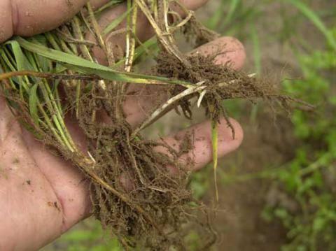Как избавиться от сорняков навсегда: применение химикатов и народных средств