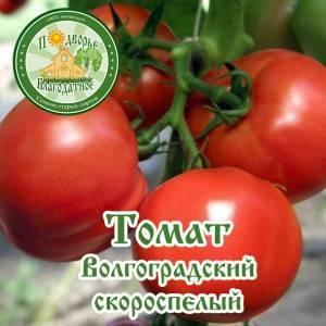 Проверенный временем сорт помидоров волгоградский скороспелый 323