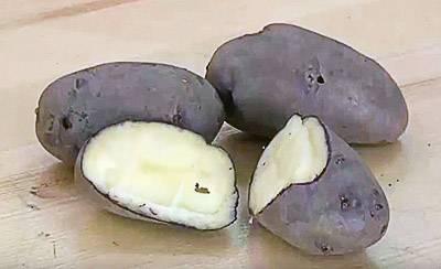 Картофель лилли