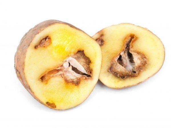 Черная картошка внутри при хранении или после варки