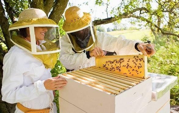 Пчеловодство как бизнес – бизнес-план по разведению пчел