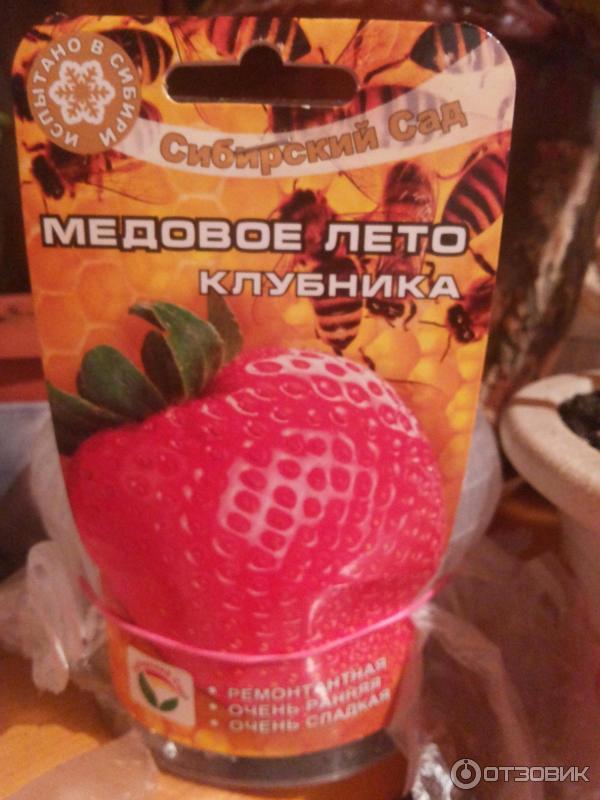 Клубника Медовое лето