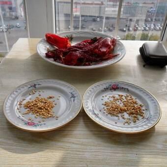 Как собрать семена перца для посадки на рассаду в домашних условиях