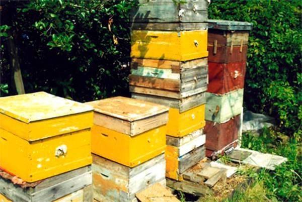 Как ухаживать за пчелами: советы начинающим пчеловодам