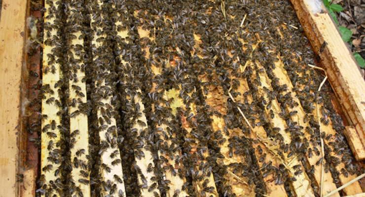 Бипин — скажем «стоп» варроатозу у пчел
