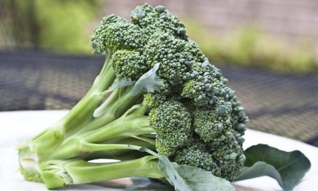Капуста брокколи: состав, польза и вред для здоровья, рецепты приготовления, противопоказания