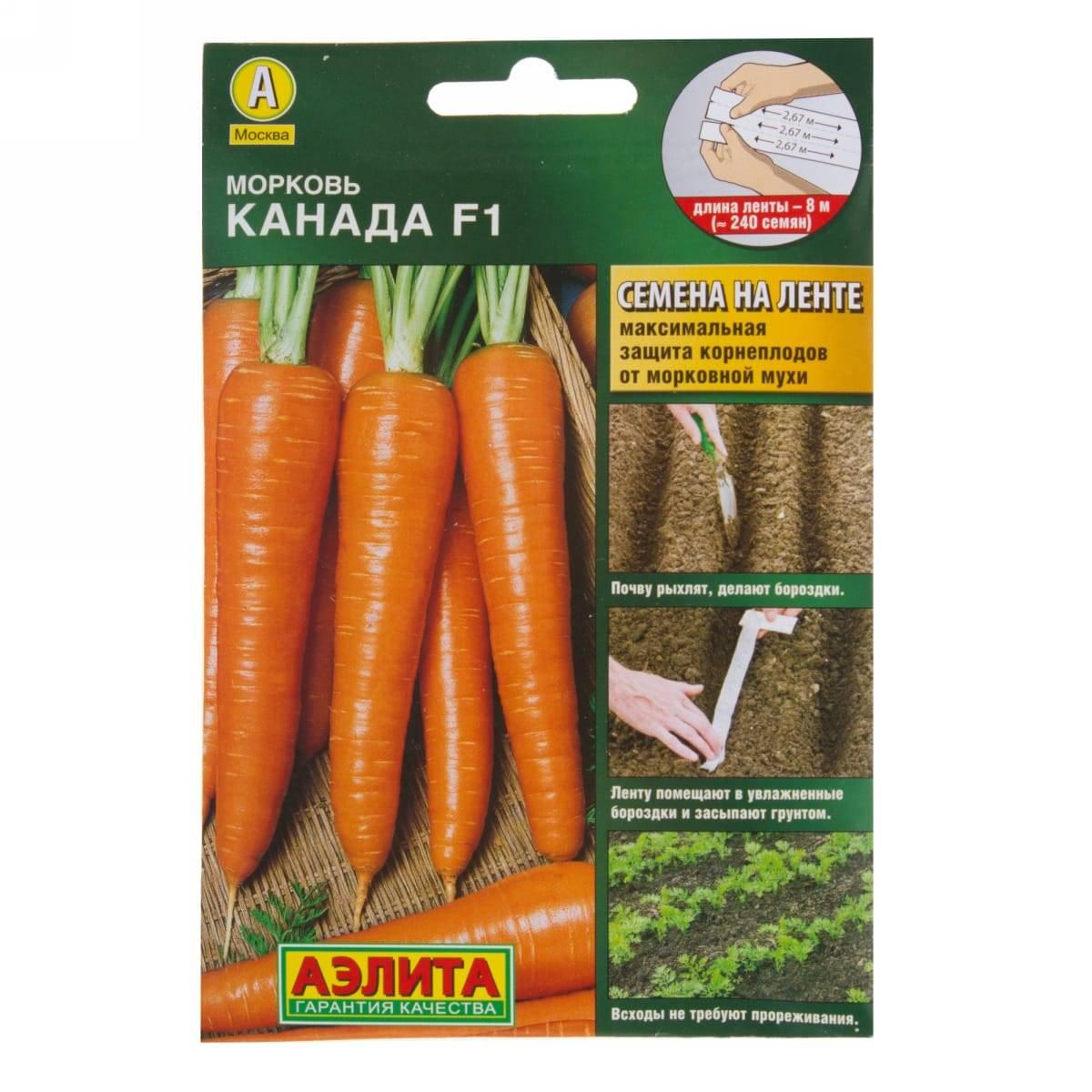Морковь сорта канада f1: овощ для тяжелого грунта. описание и характеристика