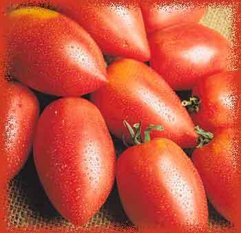 Сорта томатов сливка: описание и правила ухода