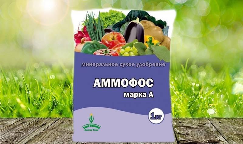 Аммофос как удобрение: применение на огороде и в саду, нормы внесения