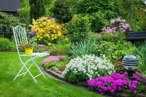 Пузыреплодник: посадка, уход и размножение декоративного кустарника