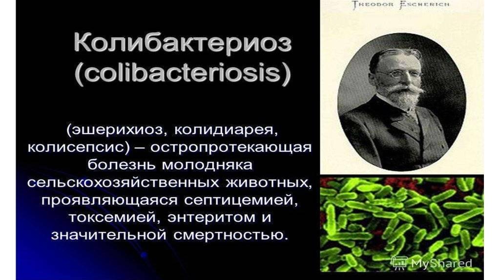 Инфекционное заболевание колибактериоз (эшерихиоз) у поросят: как проявляется, методы устранения и профилактики