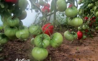 Томат арбузный — описание сорта с фото