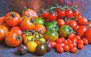 12 скороспелых сортов томатов, которые можно сеять в апреле-мае