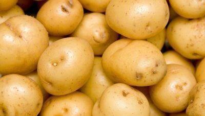 Главные особенности жёлтого картофеля