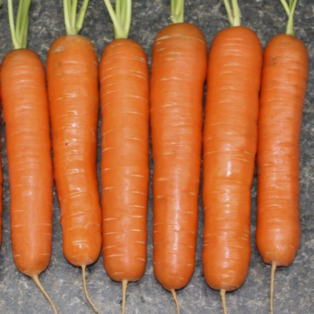 Морковь наталья f1: описание, фото, отзывы