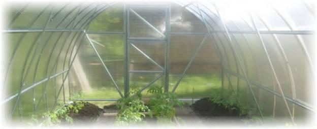 Как вырастить арбузы в теплице из поликарбоната