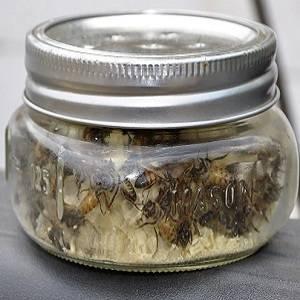 Стоит ли лечиться пчелами?