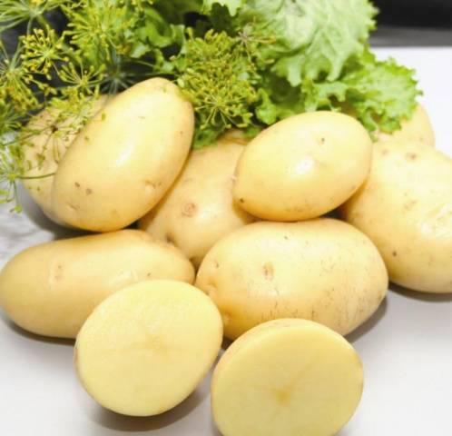 Сорт картофеля банба: ботаническое описание, агротехника выращивания и ухода