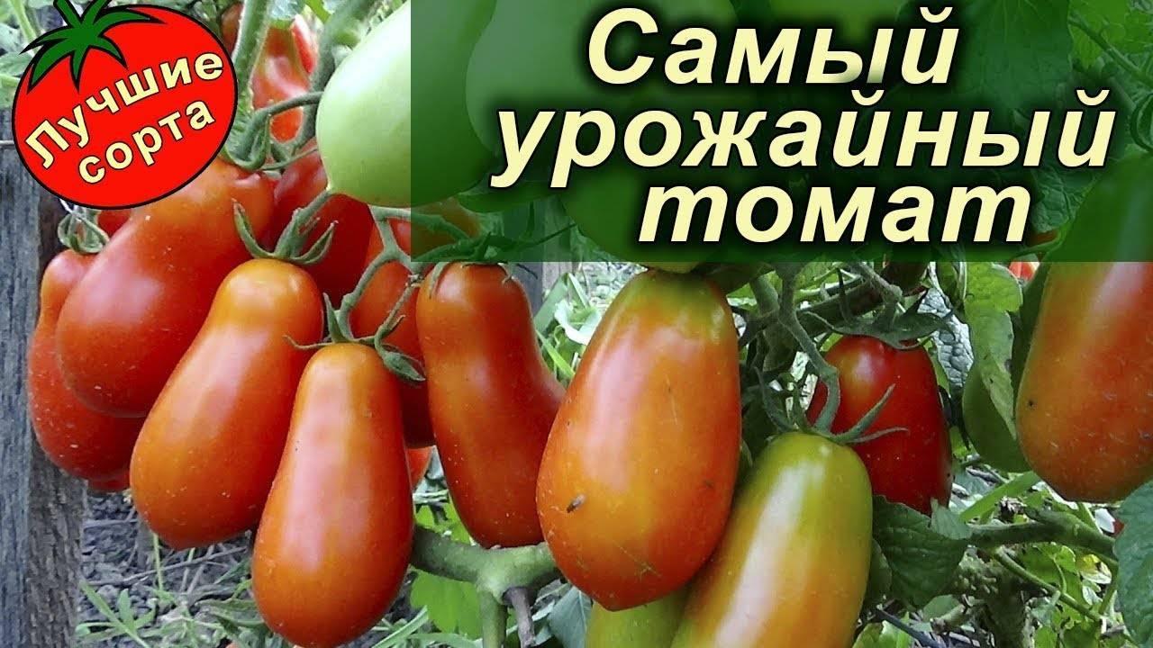 Сорта помидоров для засолки и консервирования: описание лучших с фото