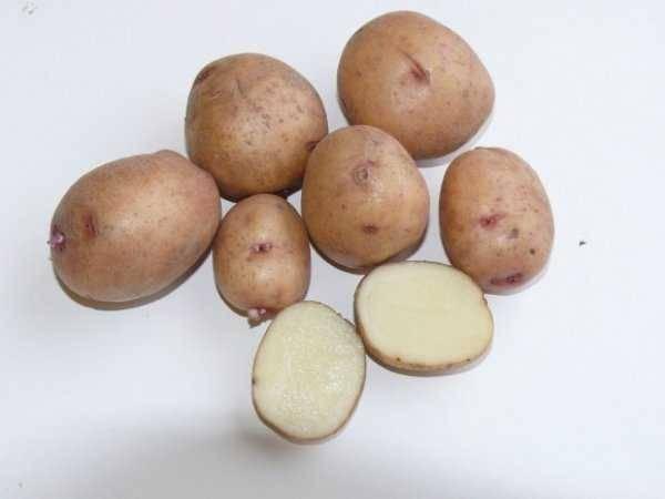 """Картофель""""аврора"""": описание  сорта, характеристики и фото"""