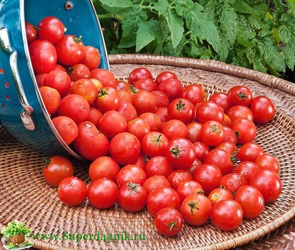 Обзор лучших сортов томатов черри