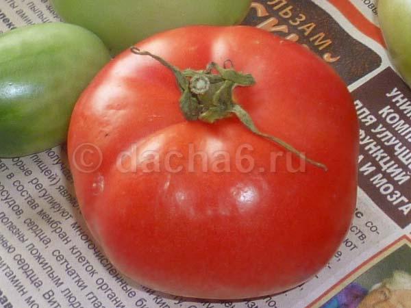 Стойкий детерминатный гибрид томата «ирина f1»: фото, отзывы, описание, характеристика, урожайность