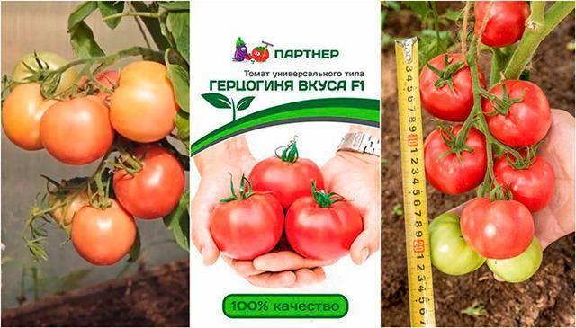 Описание и характеристика гибридного сорта томата яки f1