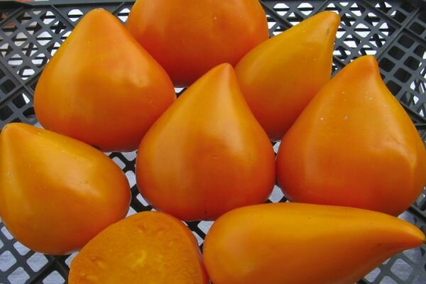 Гигантские вкуснейшие оранжевые плоды – томат «клубника оранжевая»