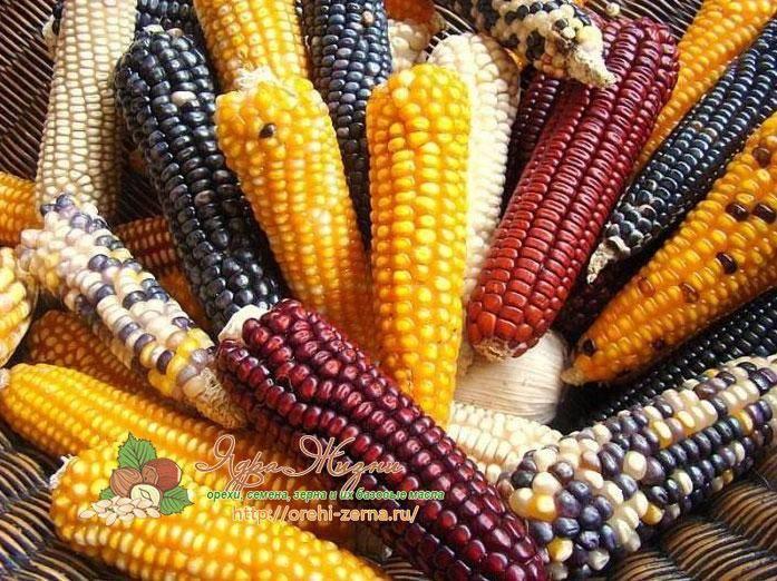 Сорт кукурузы ранняя Лакомка 121