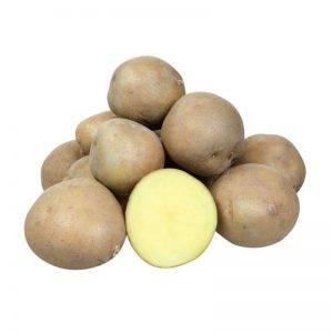 Картофель колобок — описание сорта, фото, отзывы, посадка и уход
