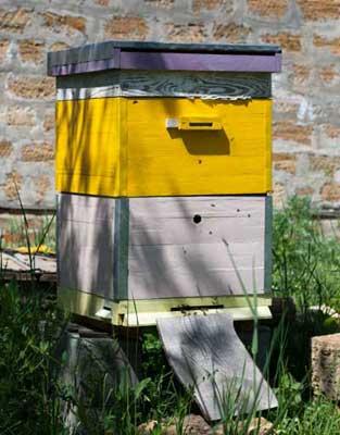 Двухматочное пчеловодство: особенности содержания пчел