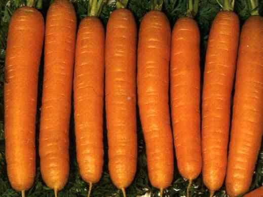 Сорта кормовой моркови