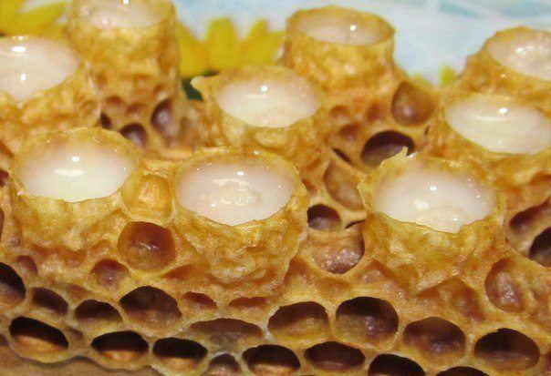 Мед с маточным молочком: полезные свойства