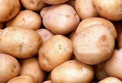 Картофель жуковский: описание сорта