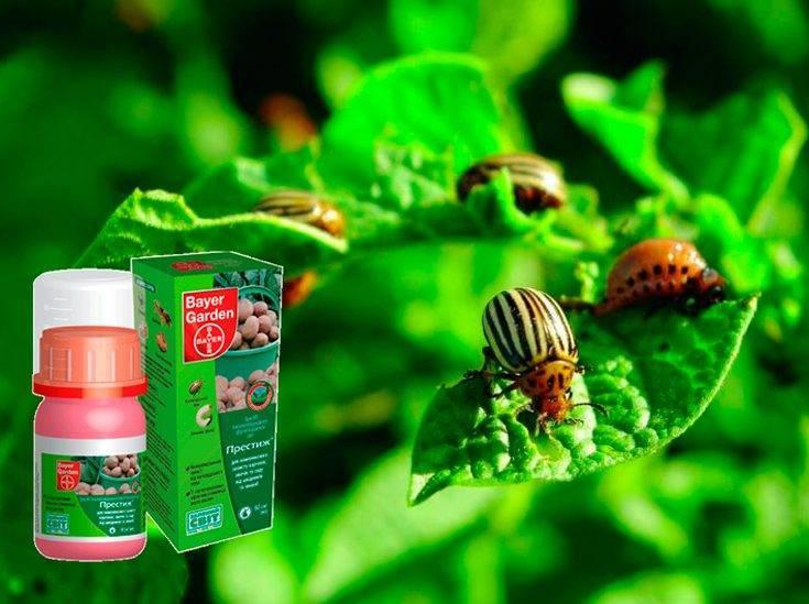 Средство престиж от колорадского жука