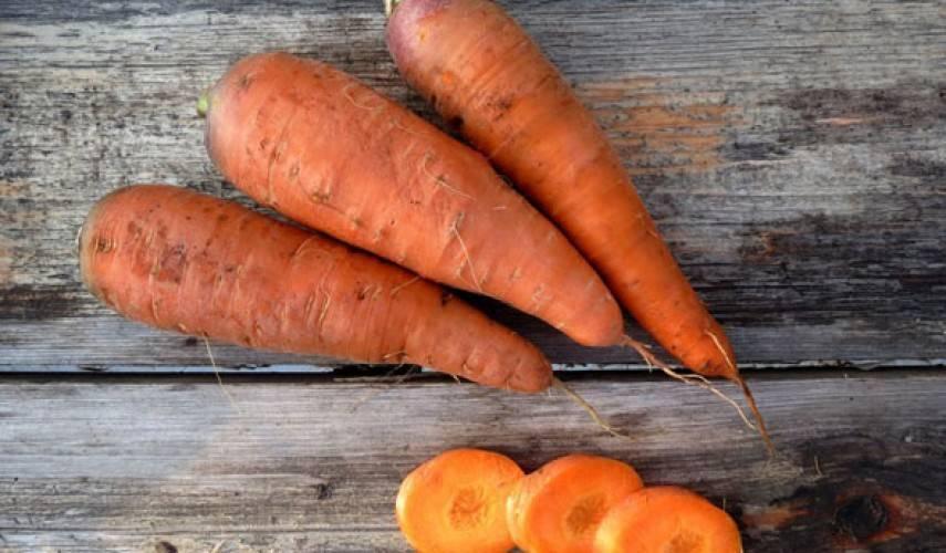 Морковь сорта «витаминная 6»: описание и несколько советов по выращиванию