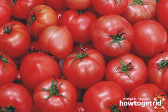 Томат каспар: характеристика и описание сорта, отзывы, фото, урожайность